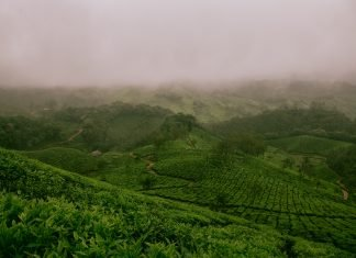 things-to-do-in-munnar